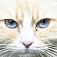 animal-cat