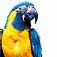 bird-parrot