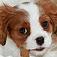 animal-puppy