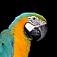 bird-macaw