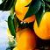 food-orange